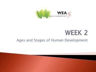 Erik Erikson  Stages Of Development Essay Eriksons Eight Stages Of Development Essays
